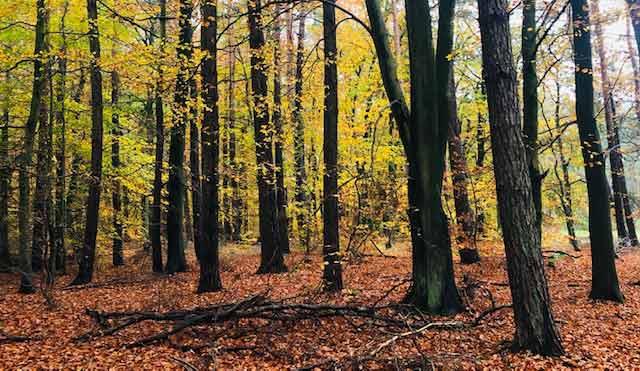 Wald-Innenkehr 2021