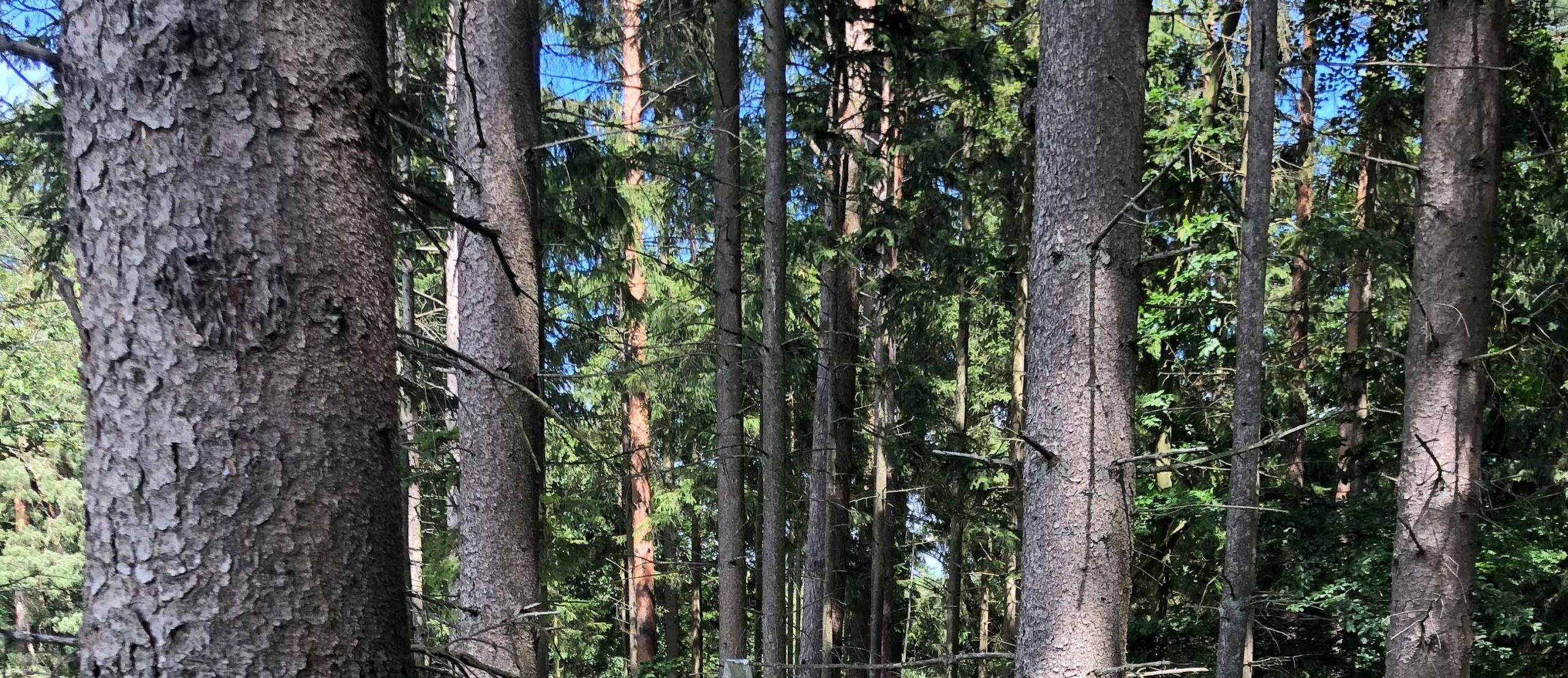 Wald-Meditation-Hamburg